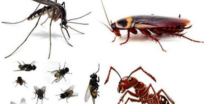 Dịch vụ diệt mối và côn trùng Uy Tín